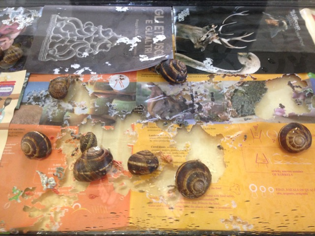 Fontcuberta, Gastropoda, Fotografia Europea, Grazioli, Guadagnini