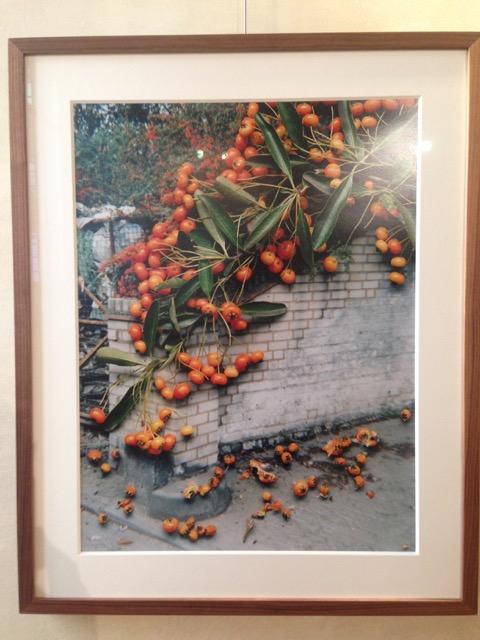 Gill, Hockney Flowers, Fotografia Europea, Grazioli, Guadagnigni