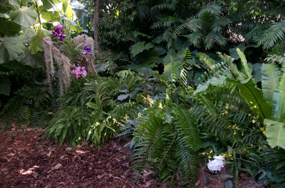 Le Salvi Chi Può, FSC, foresta tropicale, foresta vergine