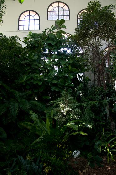 Le Salvi Chi Può, FSC, foresta tropicale, foresta vergine, Aranciera